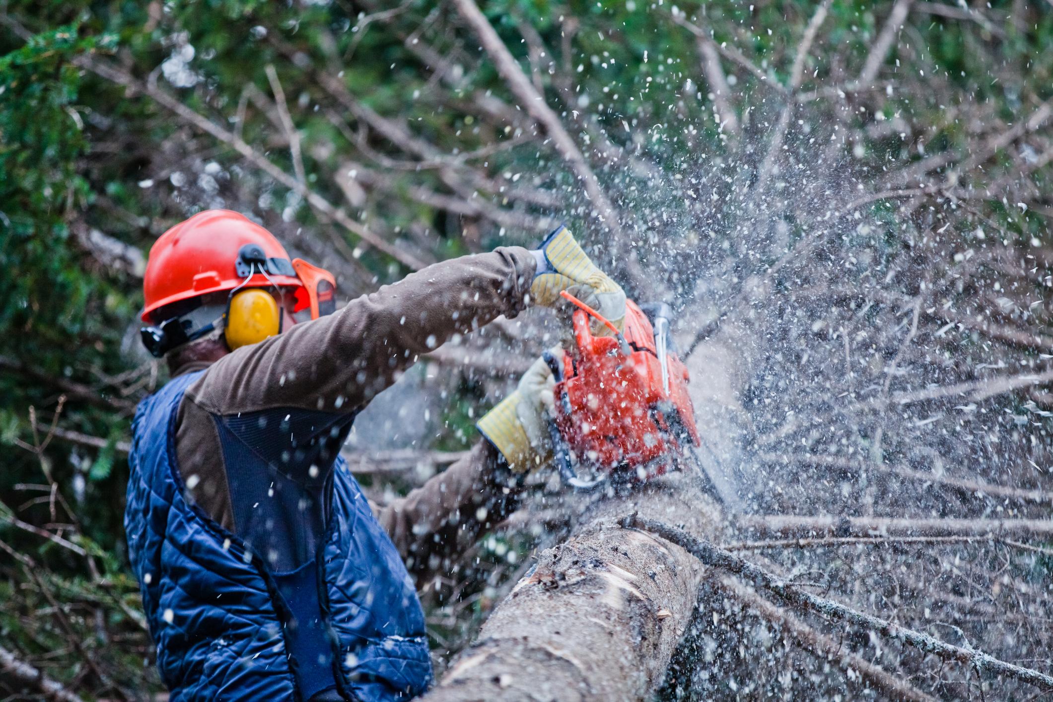 Immagine raffigurante un operaio forestale